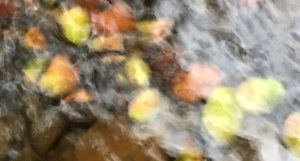 jewels-in-the-stream