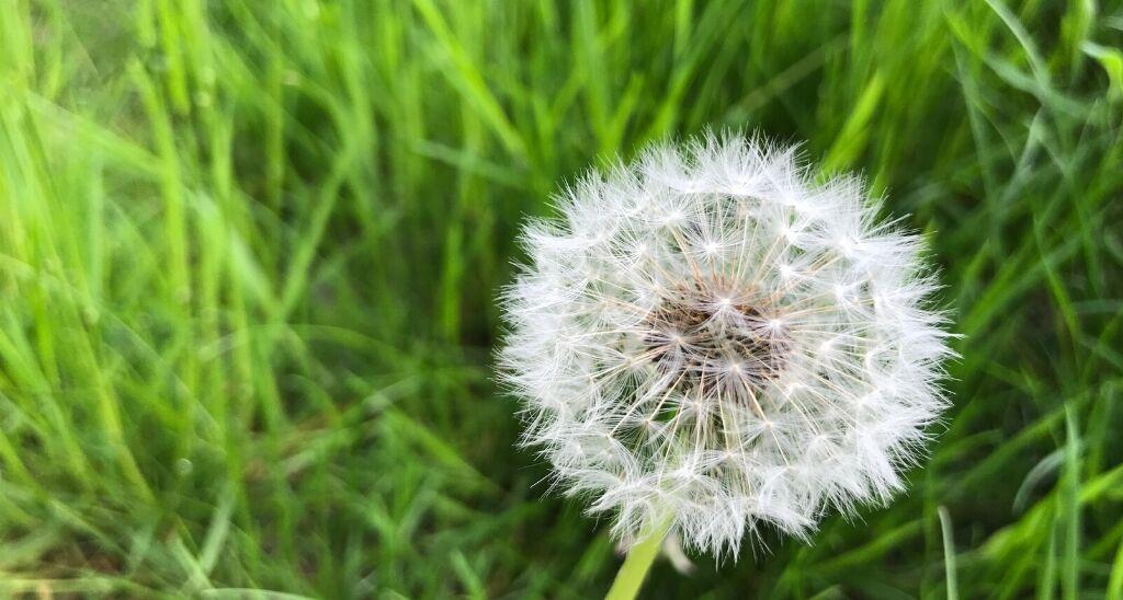 seeding-hope