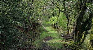 stumbling-our-way-forward