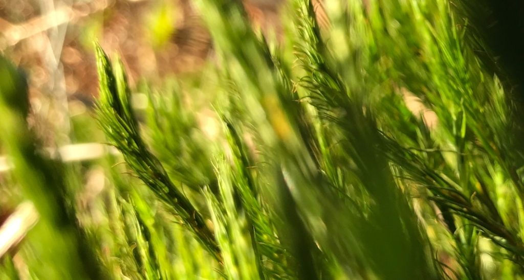 treasures-in-the-weeds